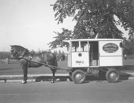 Hamilton Pure Milk Dairies Limited horse and cart